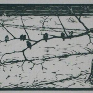Boccolari i passeri