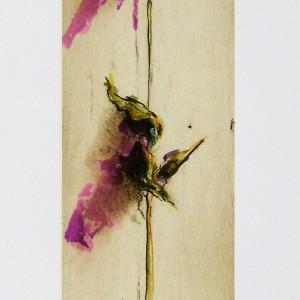 Le rose di Camilla II°